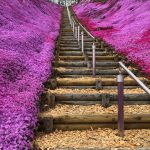 遠軽・上湧別・弟子屈・東藻琴・お花見ドライブ旅行へ!芝桜公園は本当に凄かった!